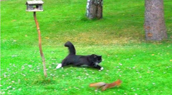 Кошка охотится на белку, но белка не так проста, как кажется. Обхохочешься!