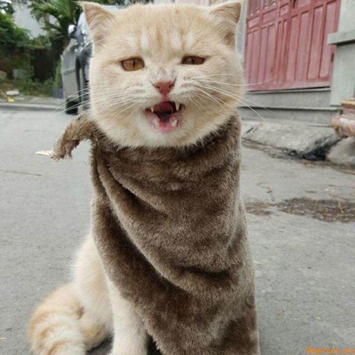 Во время наводнения этот котик придумал как выжить