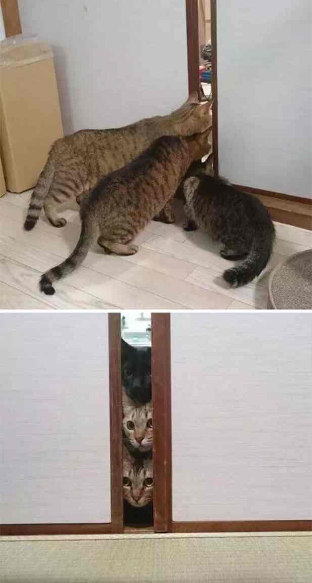 Смешные реакции животных, которые узнают о чем-то впервые