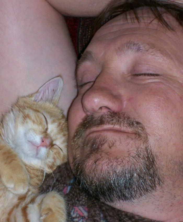 17 отцов семейств, которые были категорически против «кошки в доме», а потом