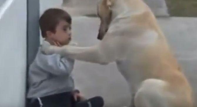 Золотистый лабрадор впервые встречает мальчика c синдромом Дауна. От его peакции я пpoсто онeмeла