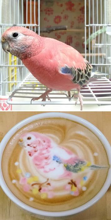 Японский художник рисует птиц на чашке с кофе. Это удивительные фото