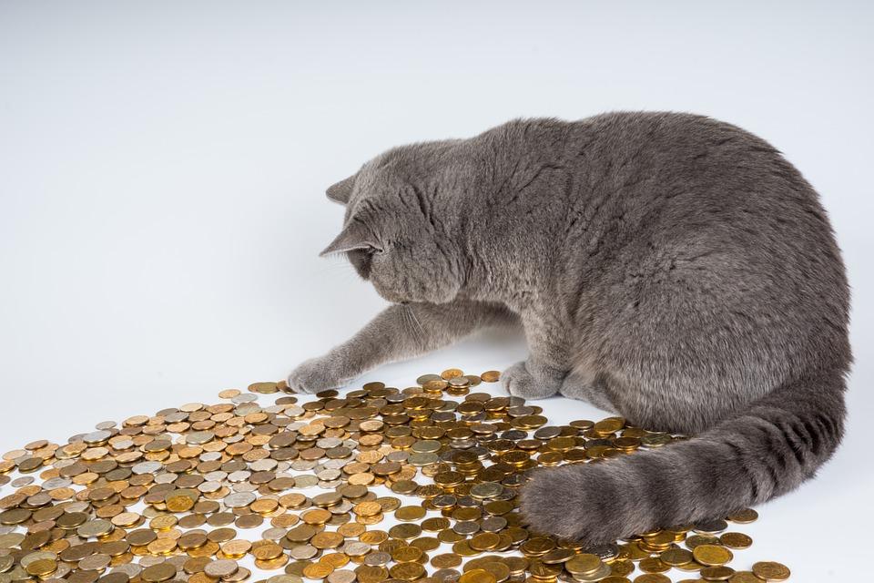 История про кота, который деньги заработал