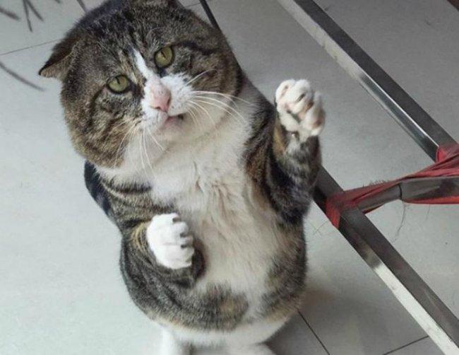 Этому котику только в театре выступать!