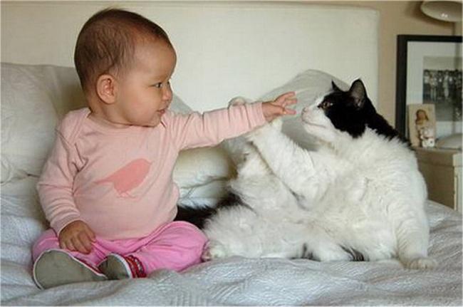 Домашние любимцы – лучшие друзья для малыша