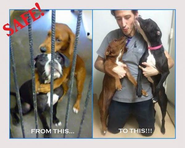 Собаки обнялись перед усыплением. Это фото спасло им жизнь!