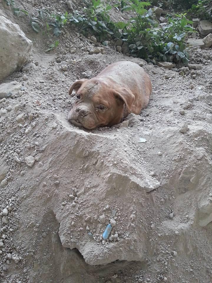 Парень прогуливался со своей собакой, внезапно он увидел пса, которого закопали живьем