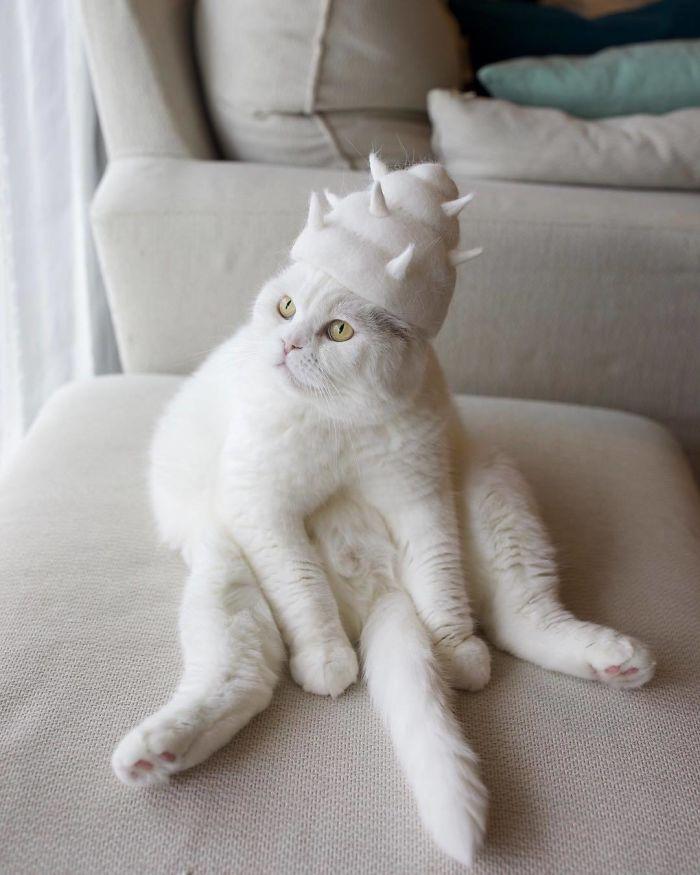 Супруги из Японии делают шапочки из кошачьей шерсти