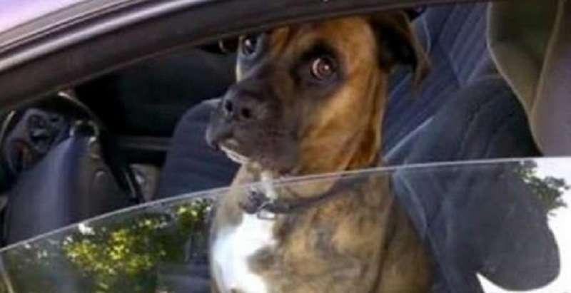 Пес сидел на водительском сидении, и парни решили над ним подшутить