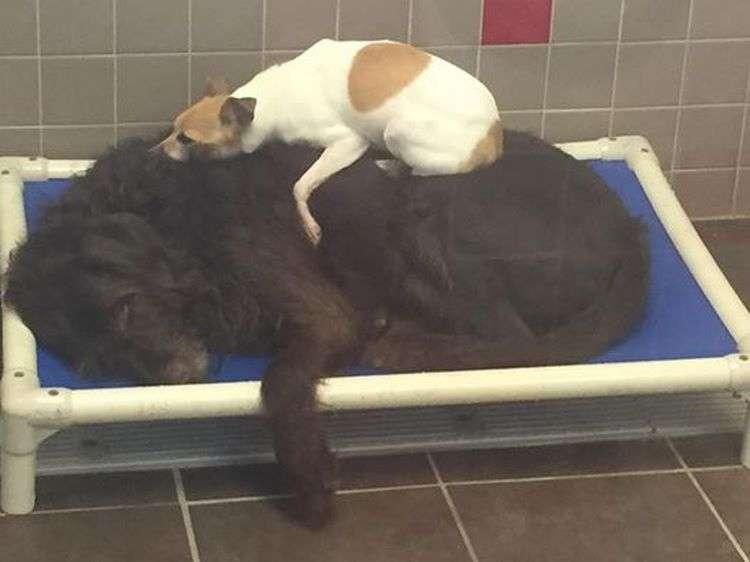 Две брошенные собаки не отходили друг от друга. Поэтому приюту пришлось пойти против правил.