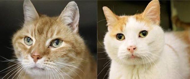Женщина забрала кота из приюта, а на следующий день вернулась за вторым…