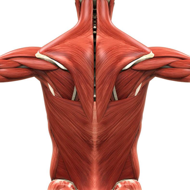 Эффективные Упражнения с полотенцем: избавят вас от боли в спине