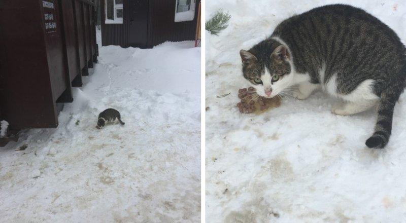 Промерзшая кошечка неделями сидела у мусорки в лютые морозы…
