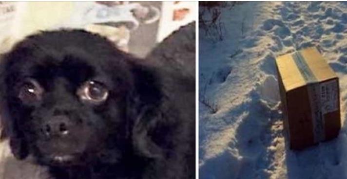 Водитель заметил, как собака царапает коробку на обочине и громко скулит…