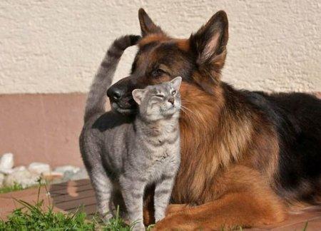 Как служебная собака стала кошачьей нянькой