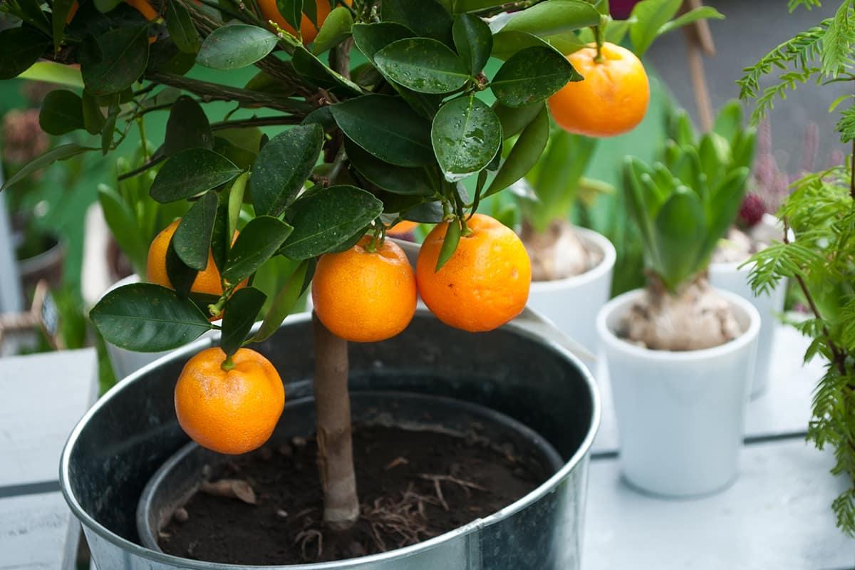 Какие растения очищают дом от неблагоприятной энергии