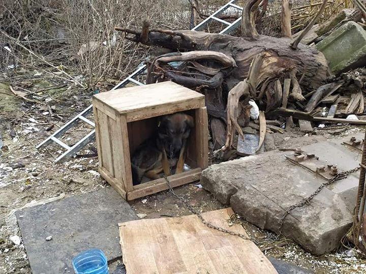 Собака умирала, сидя на цепи больше двух лет.