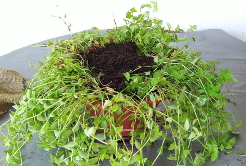 Удивительный горшок с растениями, который точно удивит ваших гостей