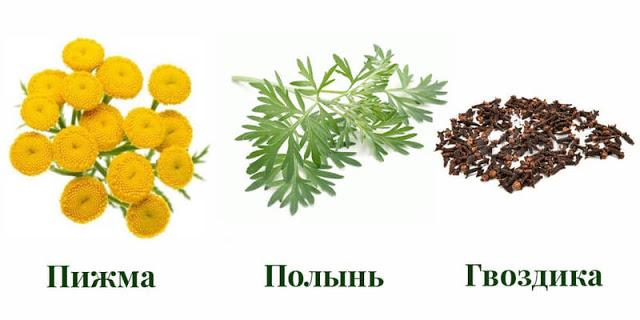 2 варианта русской тройчатки доктора Иванченко: убивают более 100 видов паразитов и грибков
